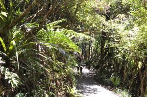 Im Regenwald auf dem Weg nach unten zum Zielpunkt