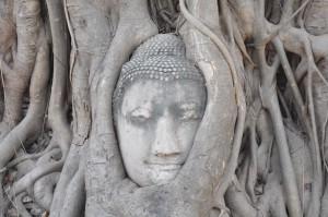Buddhakopf im Baum, Wat Phra Mahathat, Ayutthaya