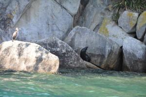 Seehund und Kormoran