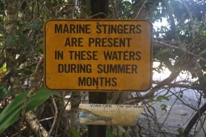 Regenwald, Cape Tribulation: Baden im Meer ist keine gute Idee