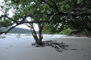 Mangrovenwald am Cape Tribulation