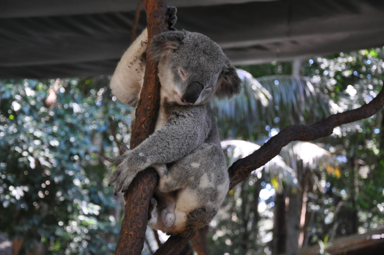 Roadtrip: Abstecher in den Koala Park