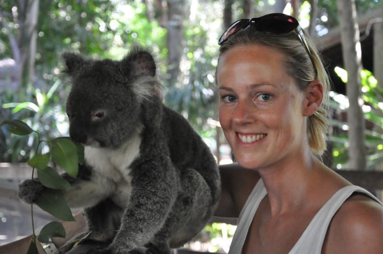Koala streicheln im Koala Park