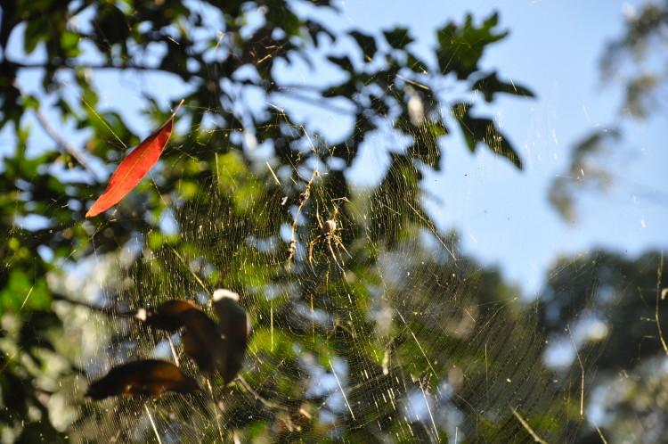 Abenteuerlicher Roadtrip: Spinnen überall