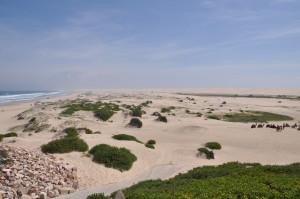 Sanddünen (mit Kamelen), Anna Bay