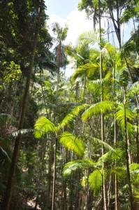 Regenwald im Inneren der Insel