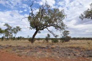 Outback Landschaft