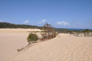 Sanddüne auf dem Weg zum Lake Wabby