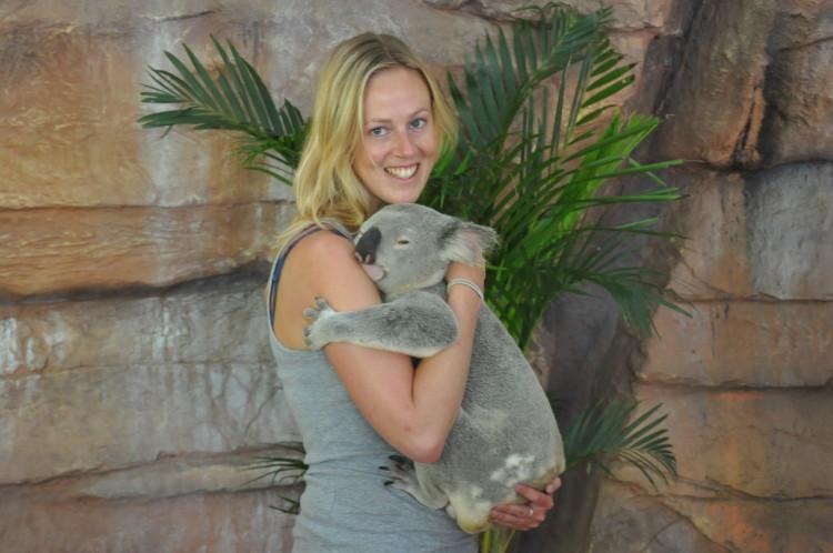 Einmal muss sein: Koala halten