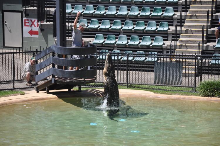 Krokodil-Show im Australia Zoo