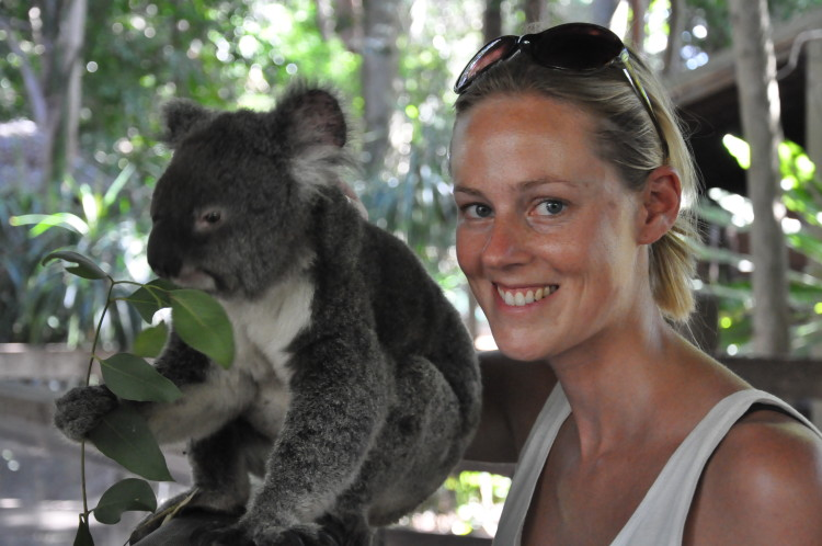Reise-Blog Just Travelling: Koala streicheln in Australien