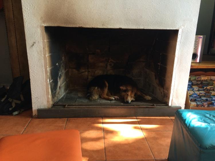 Hund im Kamin