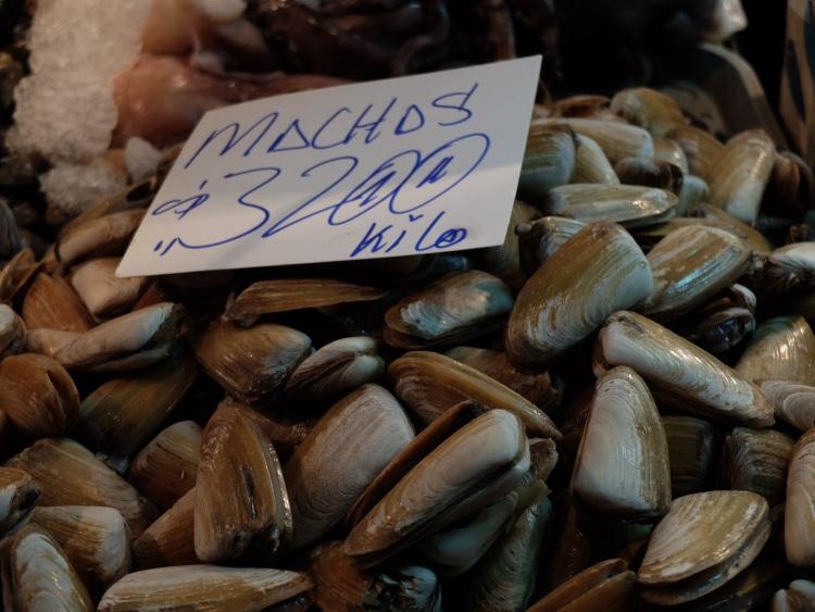 Machas - chilenische Muscheln