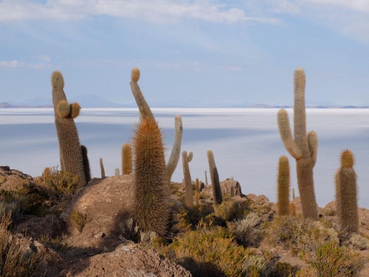 Das perfekte Kaktusfoto?