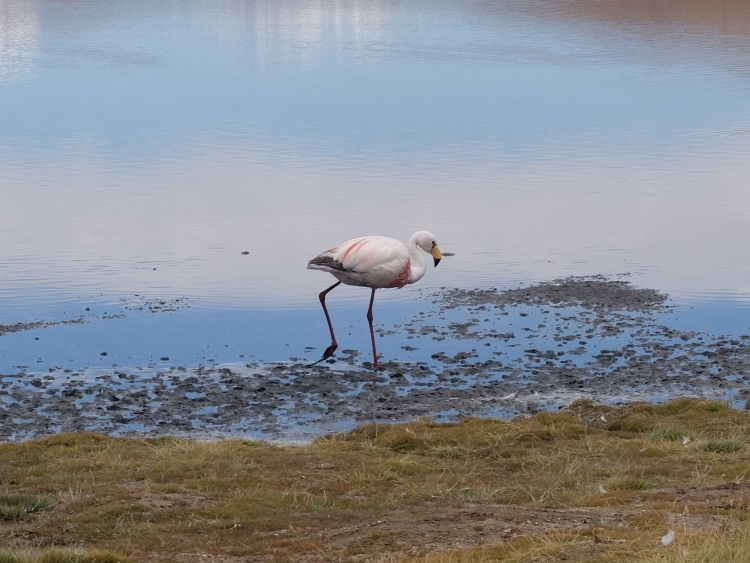 Die Lagunen sind voll mit Flamingos