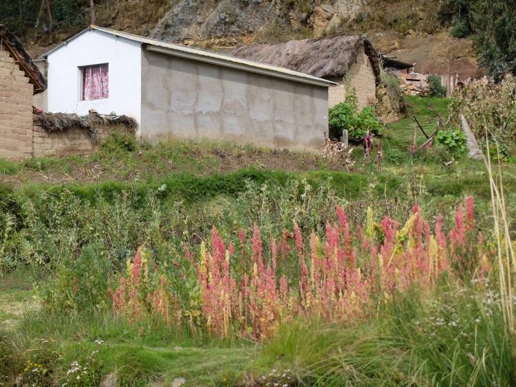 Quinoa-Felder auf dem Weg nach Norden