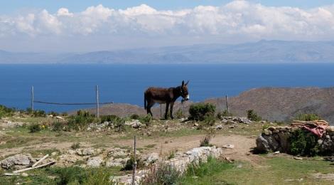 Esel als Lastentiere auf der autofreien Isla del Sol