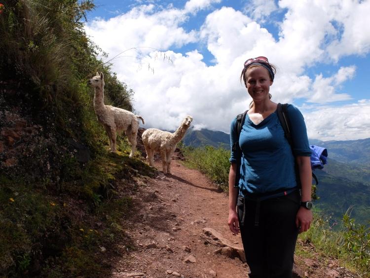 Lamas crossing