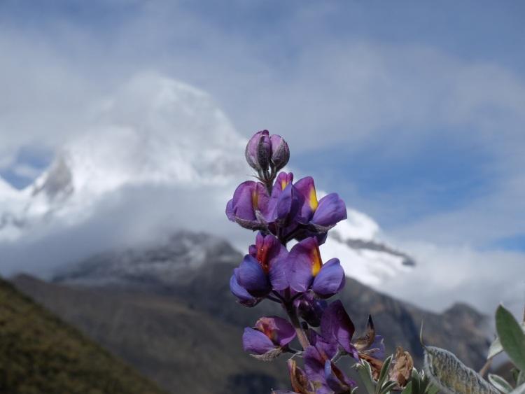 Schöne Blume, schöner Berg