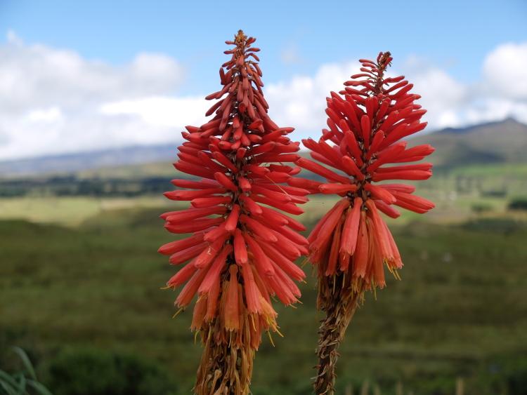 Natur pur - Cotopaxi Nationalpark